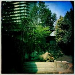 right rhino