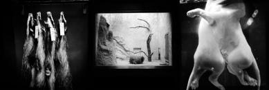Inbred & Spoonfed. Archival print on Moab Slickrock Metallic paper 300gsm. 1000 x 3000 mm
